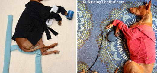 Rufus, le chien qui se transforme en d'incroyables personnages 10