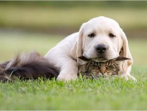 EXCLU : Connaissez-vous le meilleur coussin pour votre chien ? Regardez ces photos, vous comprendrez ! 6