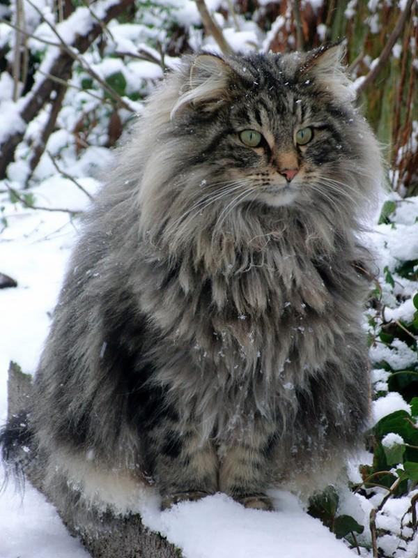 Big cat12