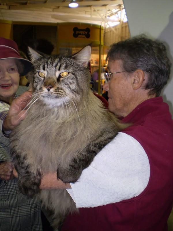 Big cat13