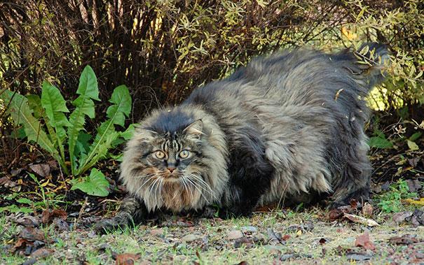 Big cat14