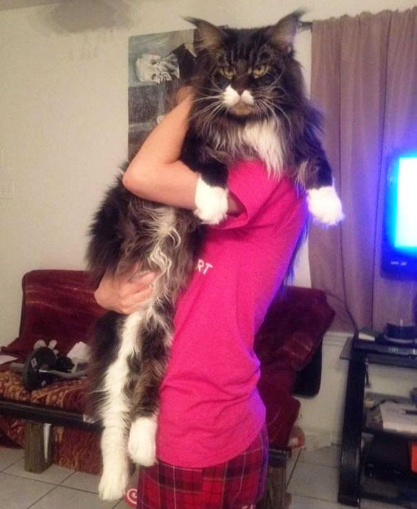 Big cat16