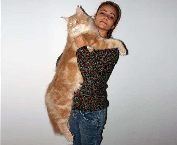 Big cat18