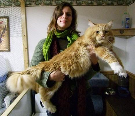 Big cat3