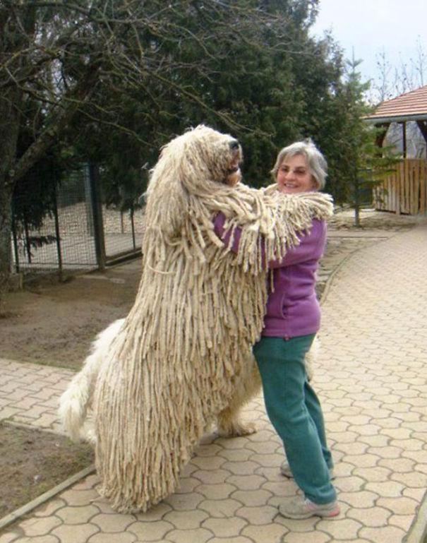 Big dog10