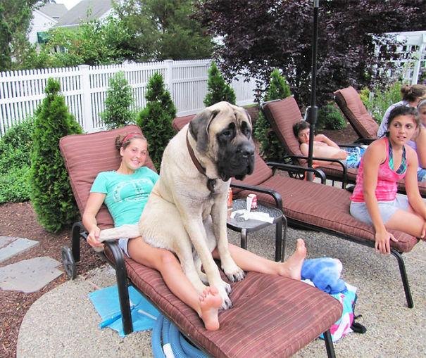 Big dog4