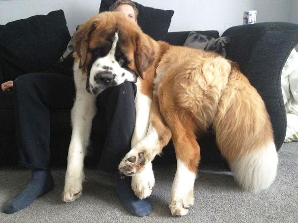 Big dog6