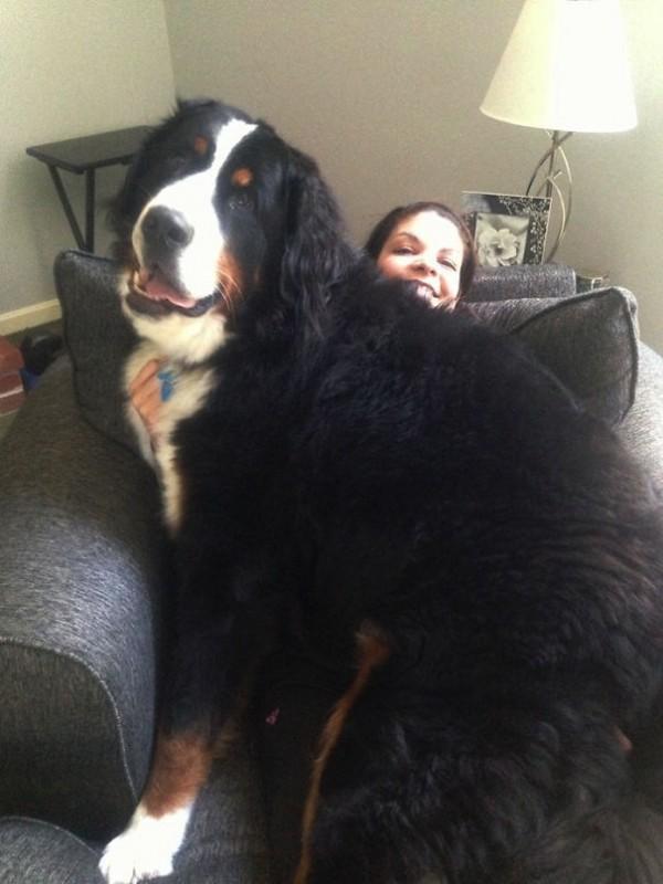 Big dog8