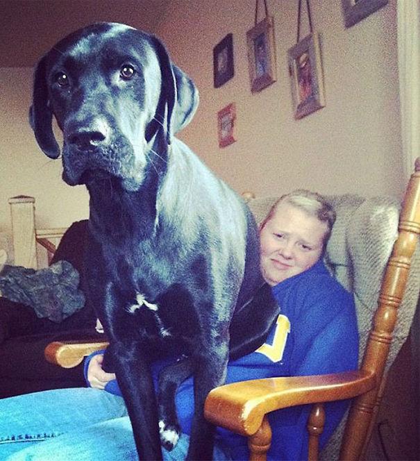 Big dog9