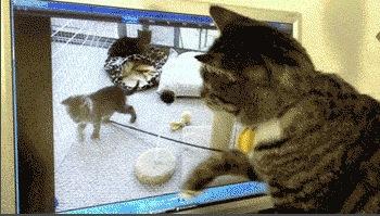 Ce chat cherche son copain