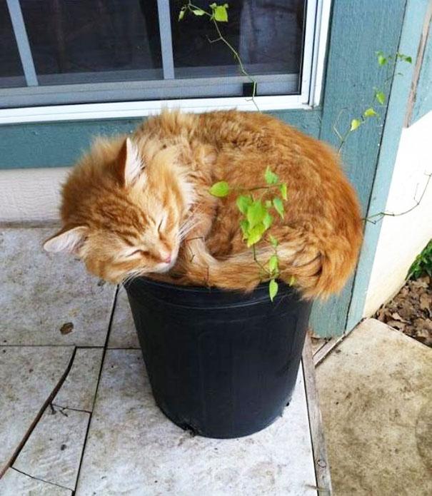 18 plantes qu'il ne faut surtout pas arroser ! 11