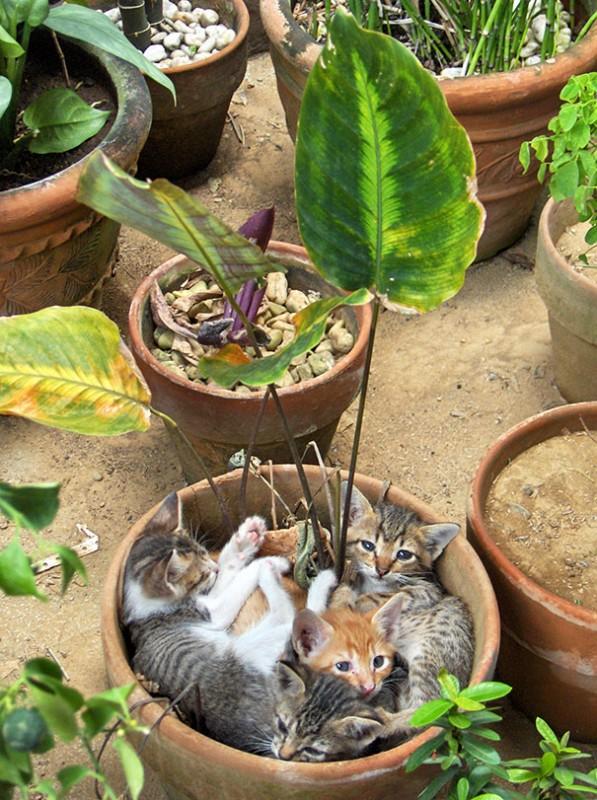 18 plantes qu'il ne faut surtout pas arroser ! 1