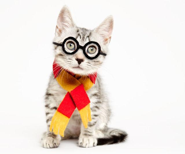 accessoire-chat-pour-adoption-1