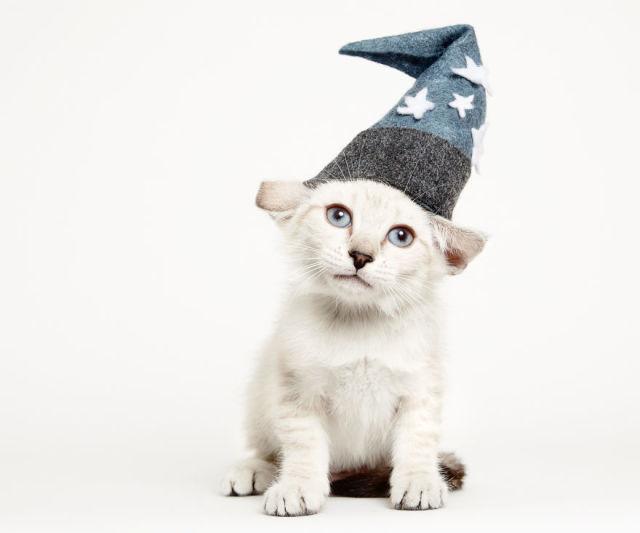 accessoire-chat-pour-adoption-2