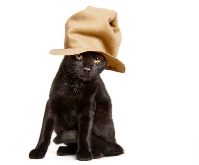 accessoire-chat-pour-adoption-3