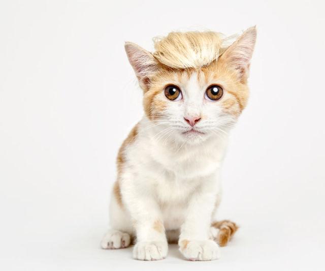 accessoire-chat-pour-adoption-4