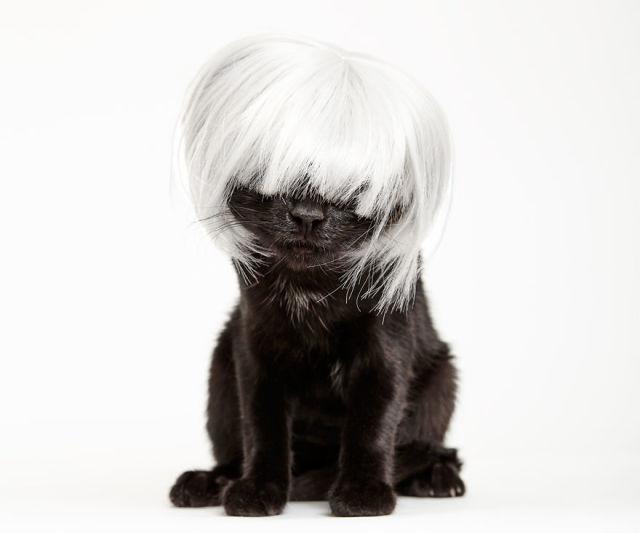 accessoire-chat-pour-adoption-6
