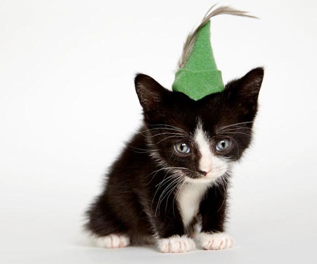 accessoire-chat-pour-adoption-7