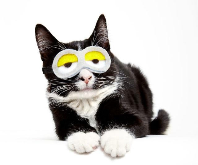 accessoire-chat-pour-adoption-8