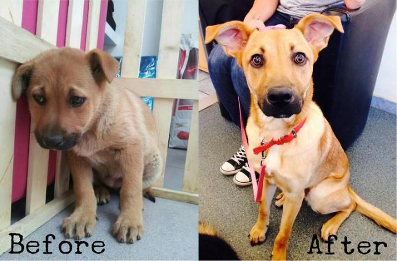 Bienfaits de l'adoption d'un animal : 16 photos AVANT/APRES 11