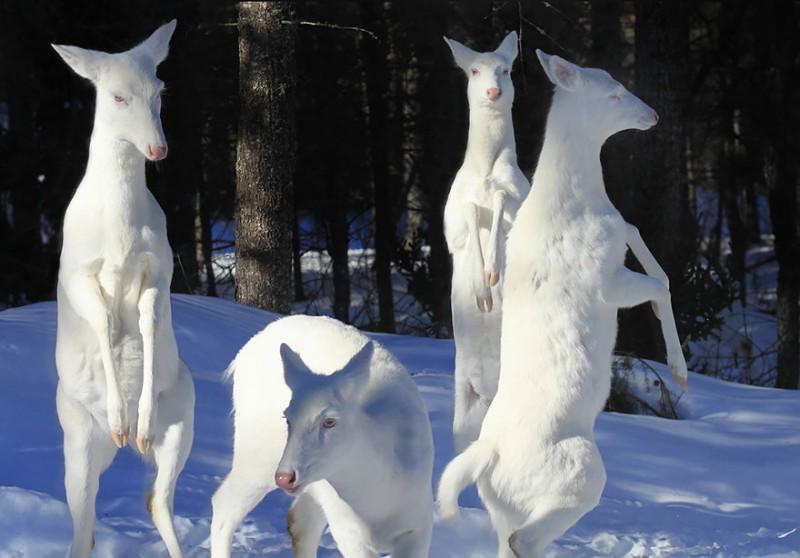 20 animaux albinos trop mignons 1