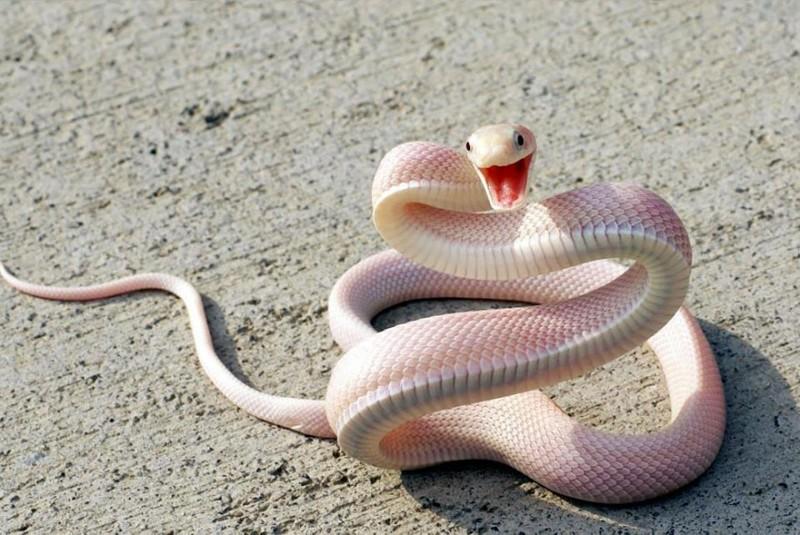 20 animaux albinos trop mignons 11