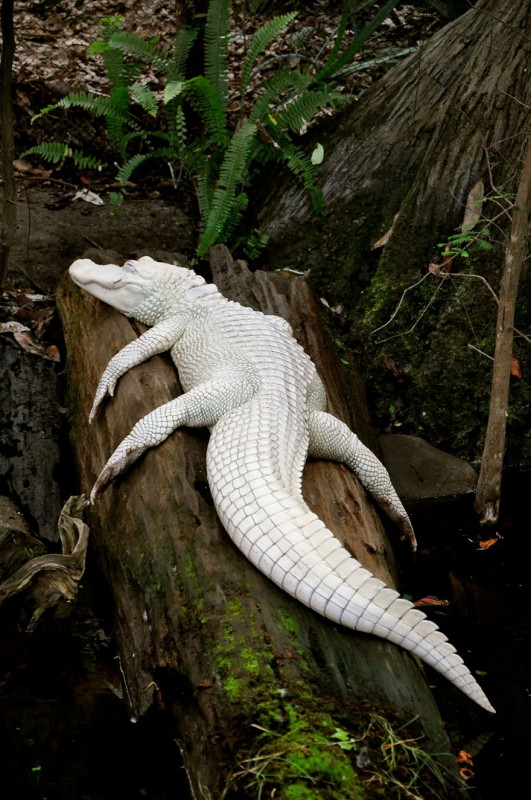 20 animaux albinos trop mignons 13
