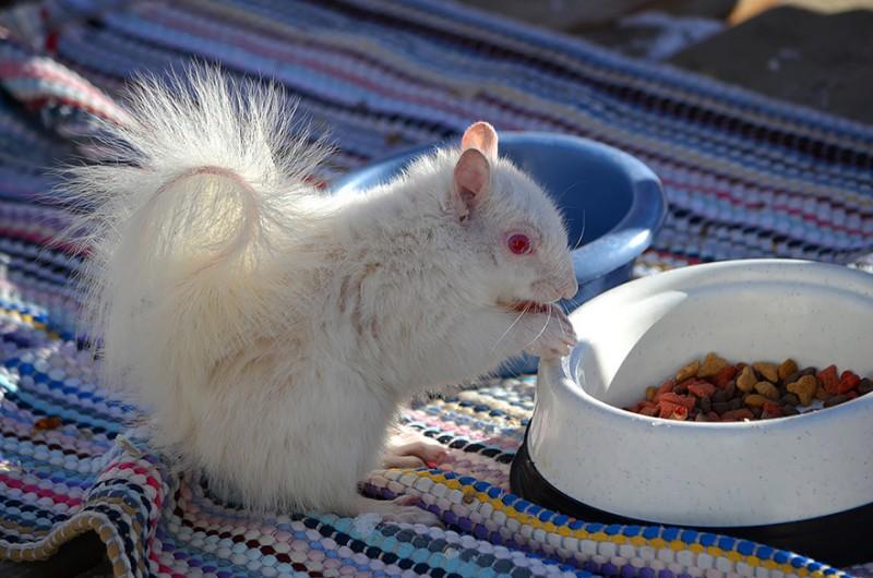20 animaux albinos trop mignons 18