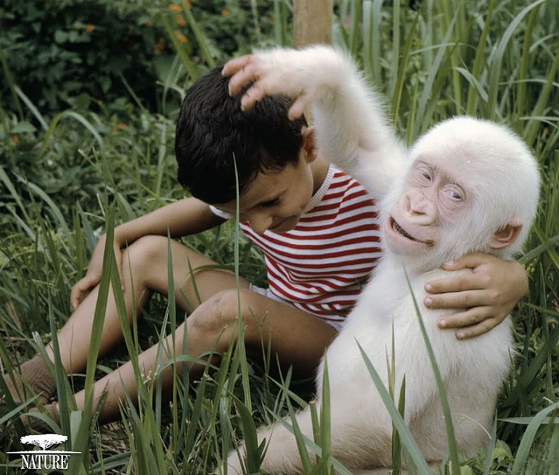 20 animaux albinos trop mignons 6