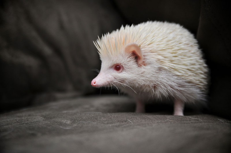 20 animaux albinos trop mignons 8