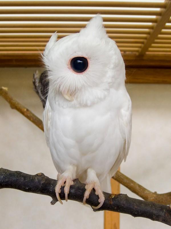 20 animaux albinos trop mignons 9