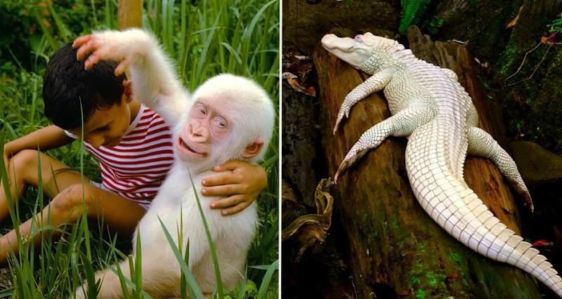 20 animaux albinos trop mignons 21