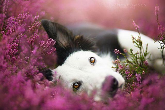 amitie_animaux1