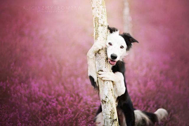 amitie_animaux10