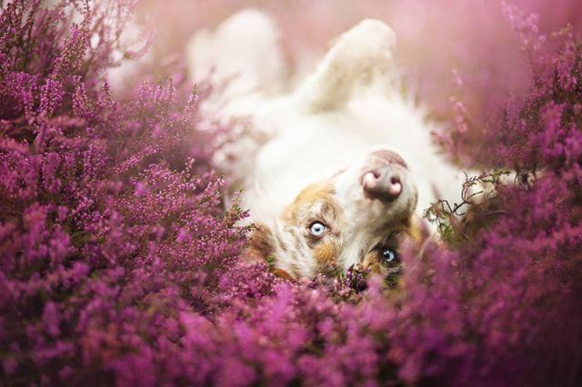 amitie_animaux16