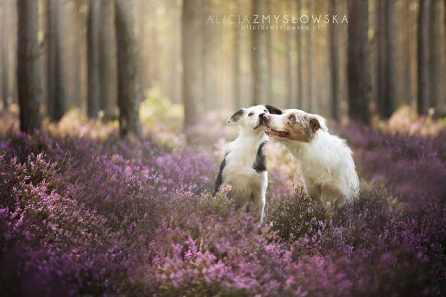 amitie_animaux19