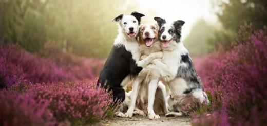 Fabuleux : des portraits de chiens incroyablement touchants par Alicja Zmyslowska 3