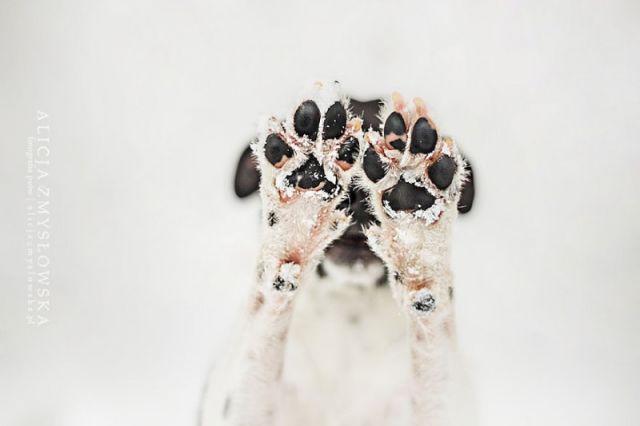 amitie_animaux7