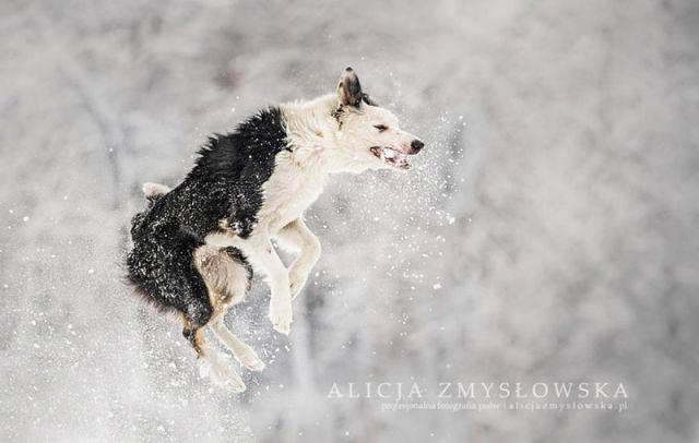 amitie_animaux8
