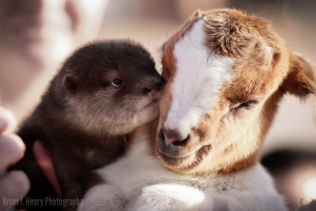 amour animaux1717