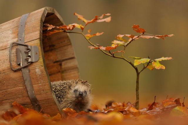 animal-automne-1