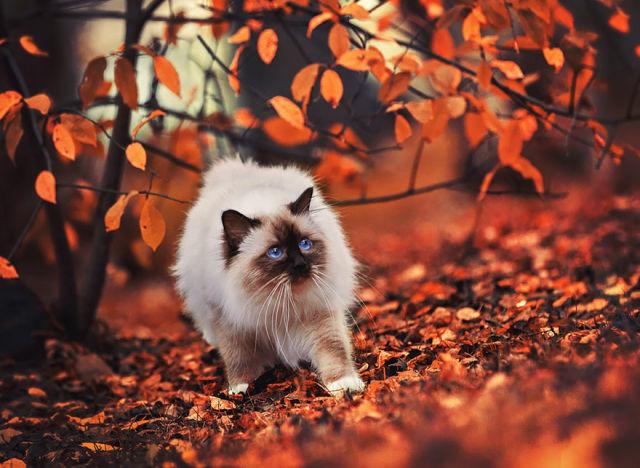 animal-automne-14