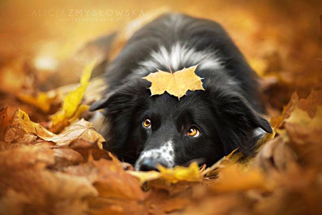 animal-automne-15