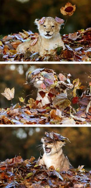 animal-automne-2