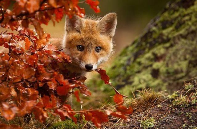 animal-automne-3