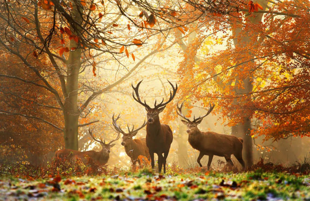 animal-automne-5