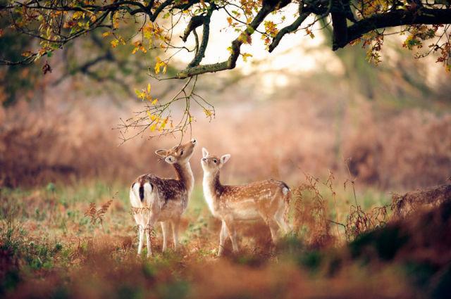 animal-automne-7
