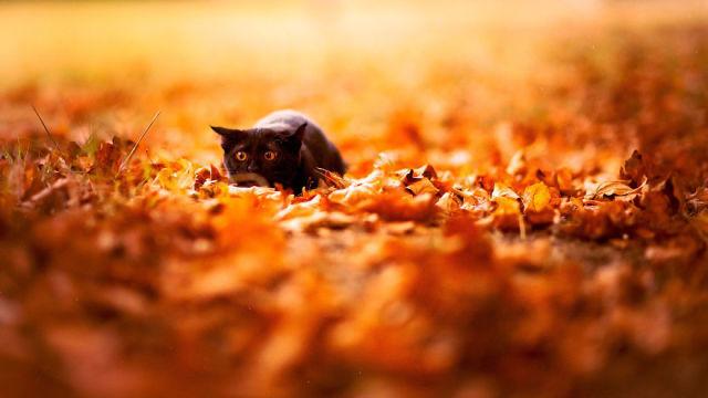 animal-automne-8