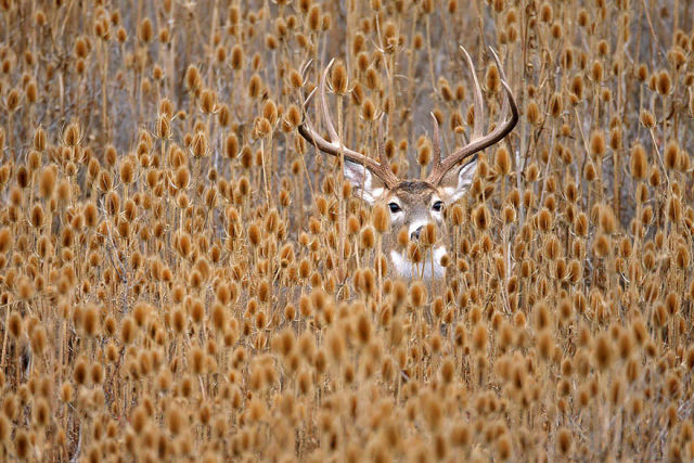 animal-automne-9