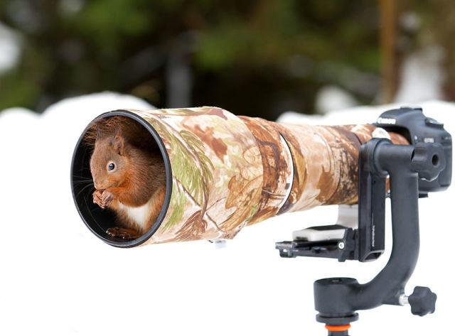 animal-photographe-10